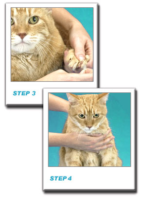 soft_claws_cat_step3and4